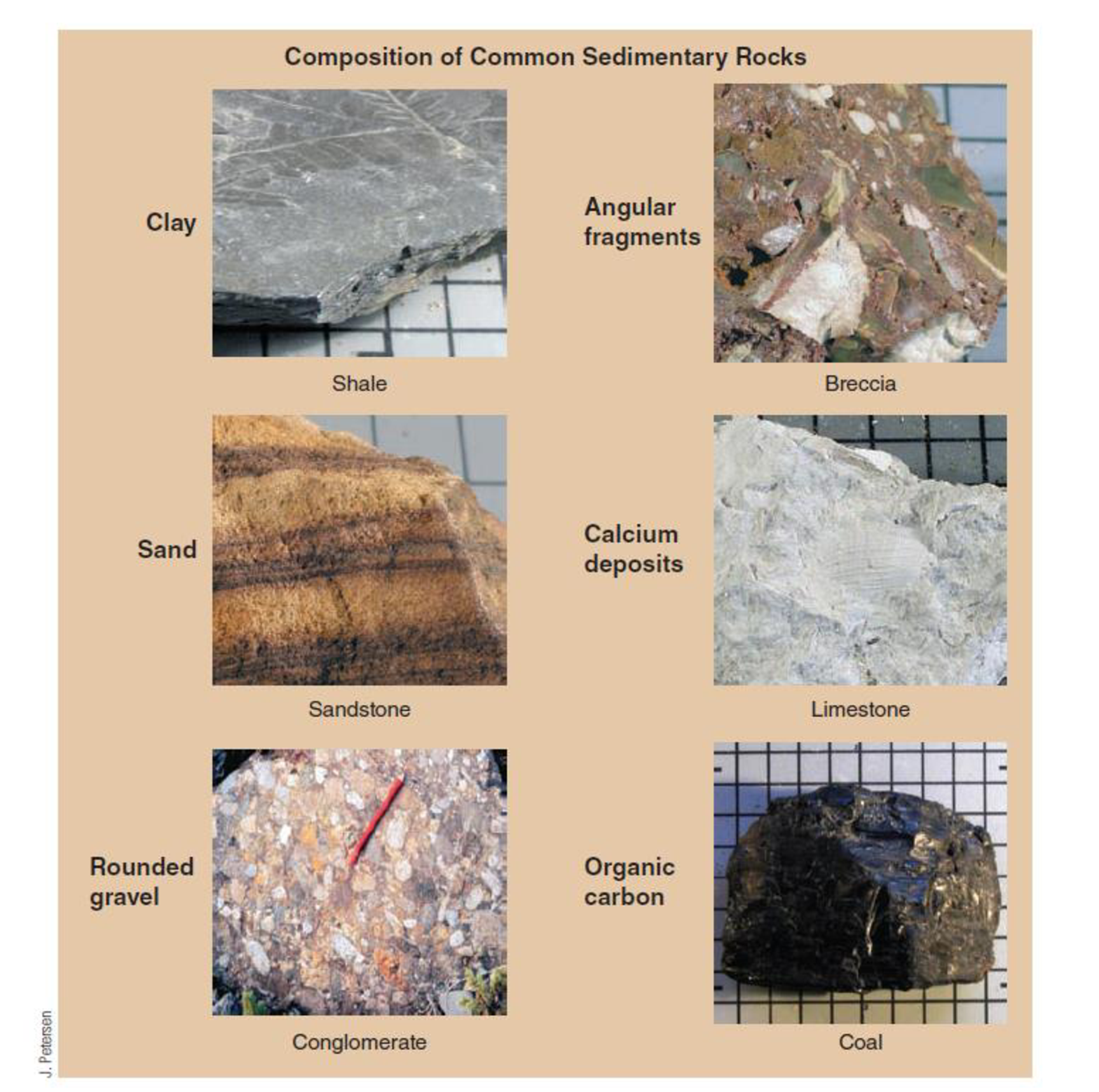 Chapter 10, Problem 11FQ, FIGURE 10.11 Sedimentary rocks are made from broken pieces of preexisting solids (clasts), organic