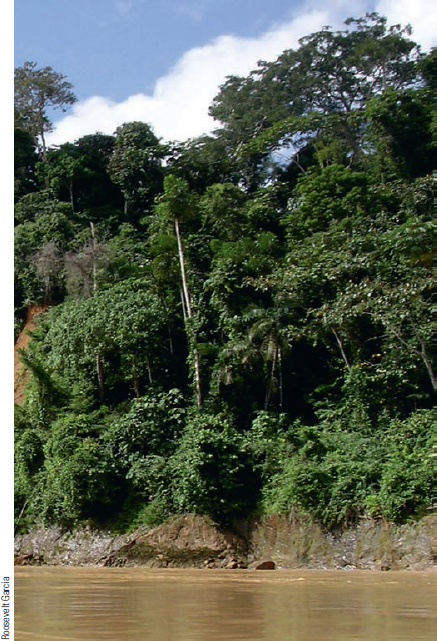 Chapter 7, Problem 12FQ, FIGURE 7.12 Jungle vegetation along the Rio Madre de Dios in Peru, a tributary to the Amazon River.