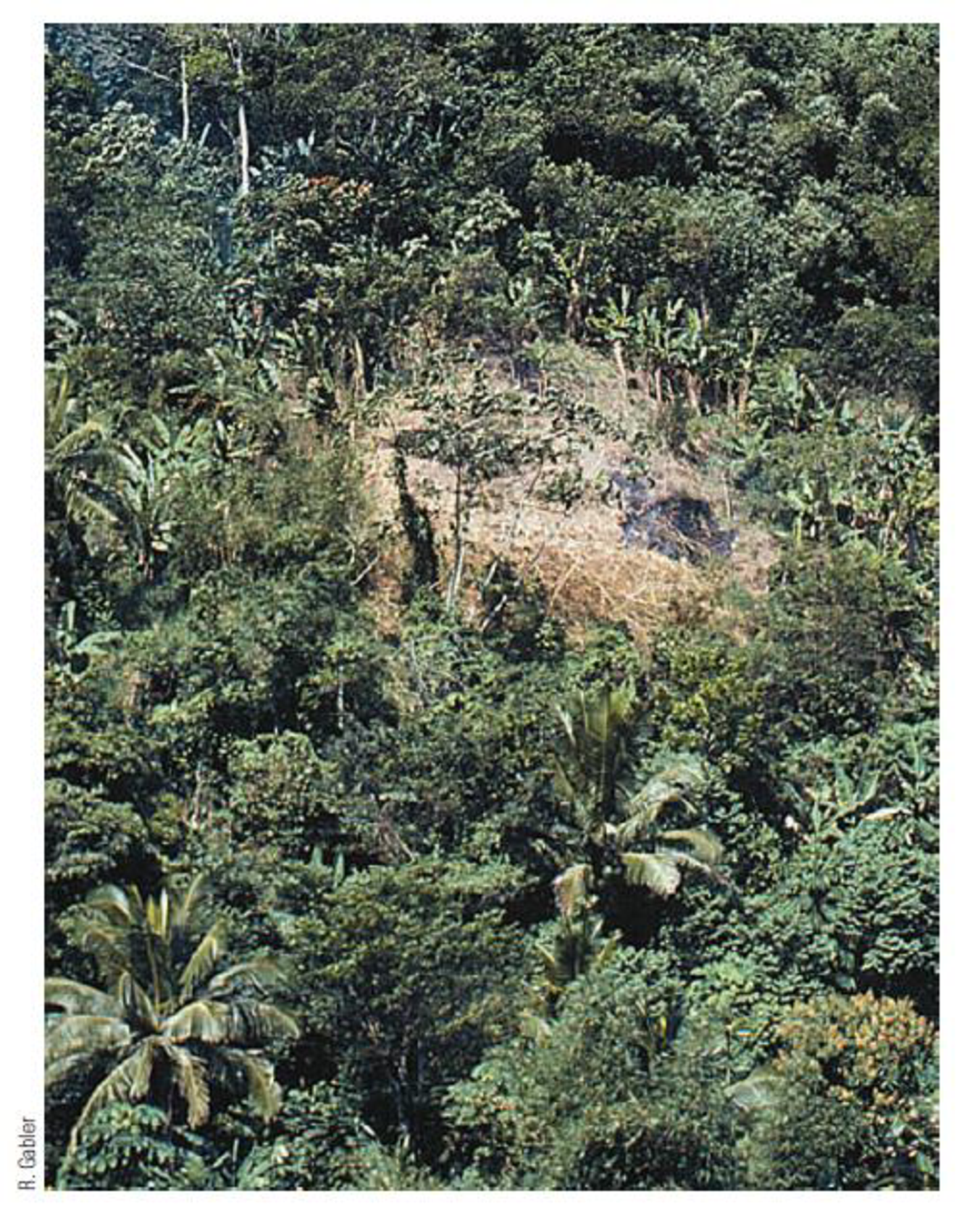 Chapter 7, Problem 13FQ, FIGURE 7.13 This opening in the tropical rainforest of Jamaica is the result of land cleared for