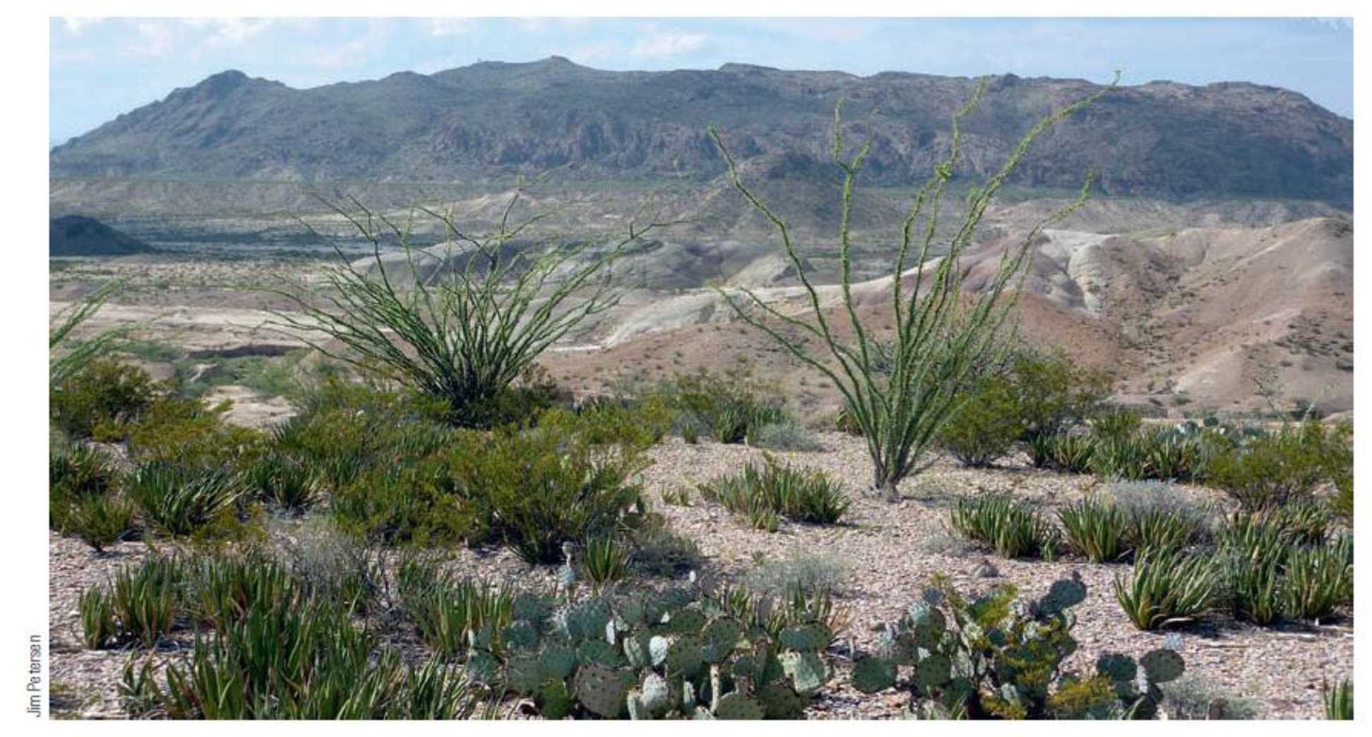 Chapter 7, Problem 20FQ, FIGURE 7.20 Desert vegetation is well adapted to arid conditions, yet it also responds well to