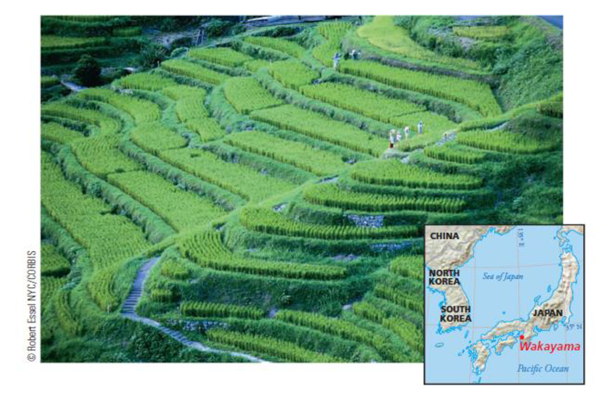 Chapter 7, Problem 28FQ, FIGURE 7.28 The terraced fields in this humid subtropical climate region near Wakayama, Japan, are