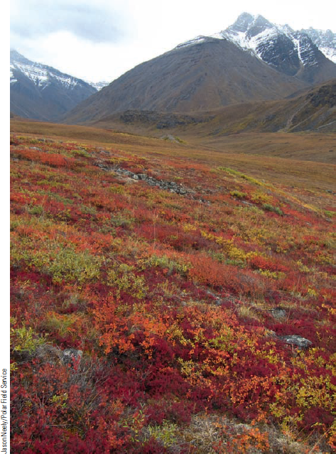 Chapter 8, Problem 10FQ, FIGURE 8.10 Autumn in the Alaskan tundra makes a colorful landscape of low-growing plants in this