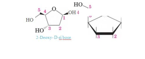 """Chapter 11, Problem 11.72P, On the left is a representation for 2-deoxy-D-ribose. This molecule is the """"D"""" of DNA. Convert this"""