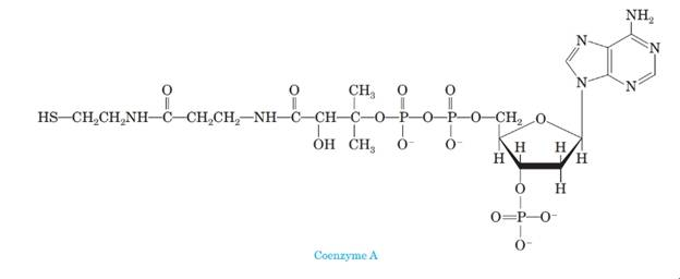 Chapter 20, Problem 20.84P, 4 Below is the structural formula of coenzyme A, an important biomolecule. (a) Is coenzyme A chiral? , example  2