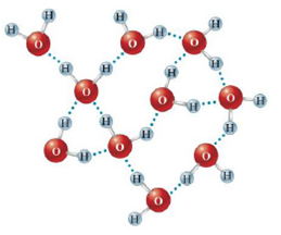Chapter 9, Problem 13Q, In the diagram below, which lines represent the hydrogen bonding? a. the dotted lines between the