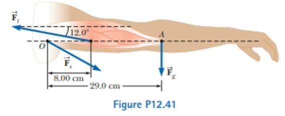 The arm in Figure P12.41 weighs 41.5 N. The gravitational force on the arm  acts through point A. Determine the magnitudes of the tension force F → t ,  in the deltoid