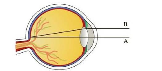 Chapter 6.8, Problem 90E, Light enters the eye through the pupil and strikes the retina, where photoreceptor cells sense Light