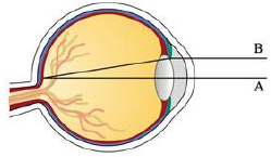 Chapter 4.4, Problem 80E, Light enters the eye through the pupil and strikes the retina, where photoreceptor cells sense light