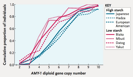 Chapter 47, Problem 2ITD, The human AMY-1 gene encodes salivary amylase, an enzyme that breaks down starch. The number of