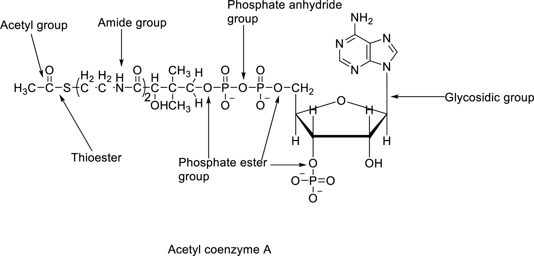 Organic Chemistry, Chapter 25, Problem 25.34P
