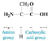 Chapter 15, Problem 86AE, Amino acids are the building blocks for all proteins in our bodies. A structure for the amino acid