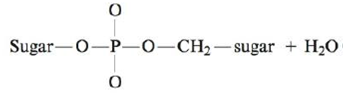 Chapter 22, Problem 131AE, The reaction to form a phosphate-ester linkage between two nucleotides can be approximated as , example  2