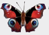 Chapter 1, Problem 1DAA, Peacock Butterfly Predator Defenses The photographs below represent the experimental and control , example  4