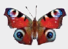 Chapter 1, Problem 1DAA, Peacock Butterfly Predator Defenses The photographs below represent the experimental and control , example  5