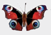 Chapter 1, Problem 1DAA, Peacock Butterfly Predator Defenses The photographs below represent the experimental and control , example  6