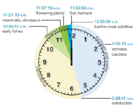 Chapter 16, Problem 3CT, If you think of geologic time spans as minutes, lifes history might be plotted on a clock such as