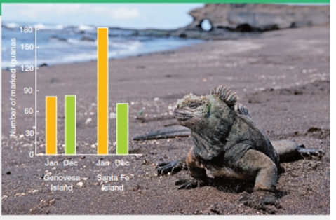 Chapter 44, Problem 3DAA, Iguana Decline In 1987, Martin Wikelski began a long-term study of marine iguanas in the Galpagos